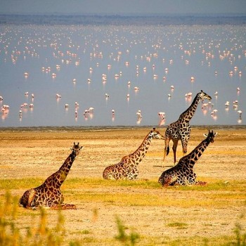 Photographic Safaris & Excursions Image Gallery