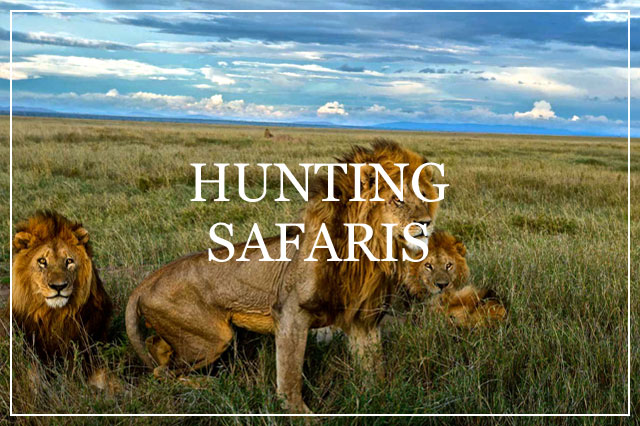 Safari Trackers Hunting Safaris