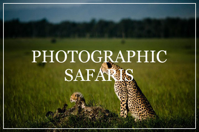 Safari Trackers Photographic Safaris